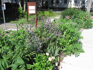 Washington Street Garden